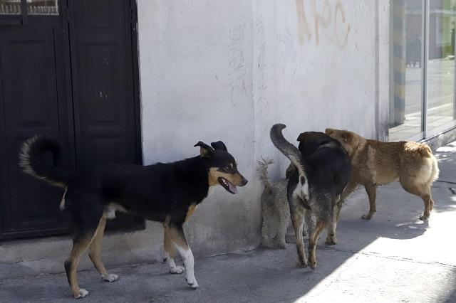 Gatito es despedazado por perros; estaban sin correa