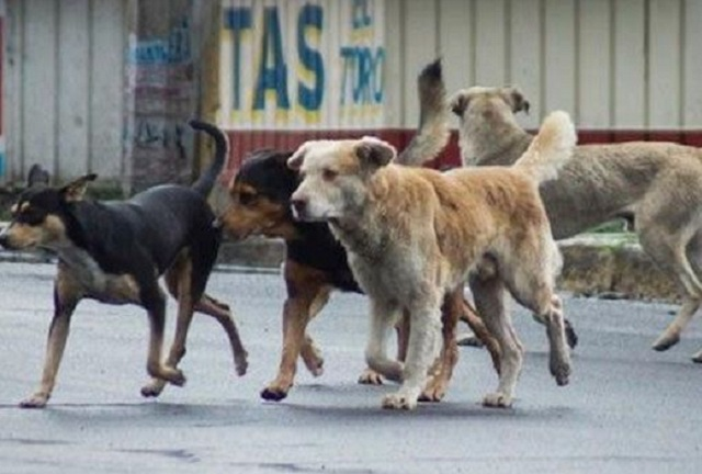Crean en Puebla producto para convertir heces de perro en abono