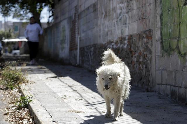 China elimina a los perros de la lista de animales que se pueden comer