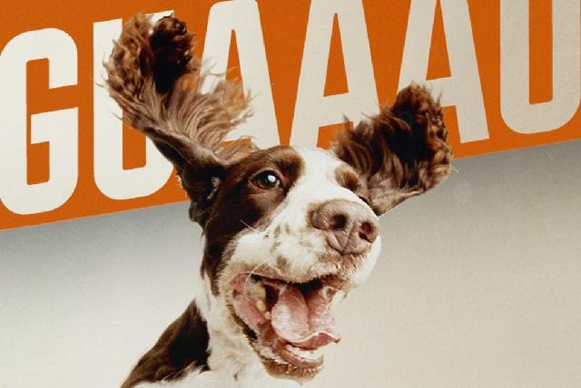 DogTv llega a Animal Planet con contenido para perros y sus dueños