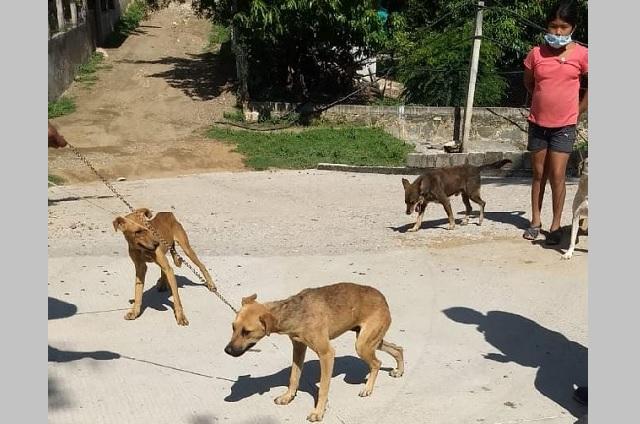 Realizan jornada de vacunación canina y felina en Xayacatlán