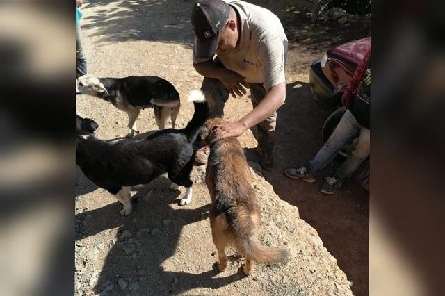 Rescatan a cachorros de una cueva subterránea en Coyomeapan
