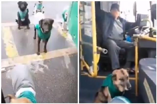 Transporte en Chile contrata perros callejeros para acompañar a choferes