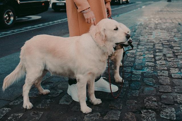 ¿Puede tu mascota contagiarte el Covid-19?