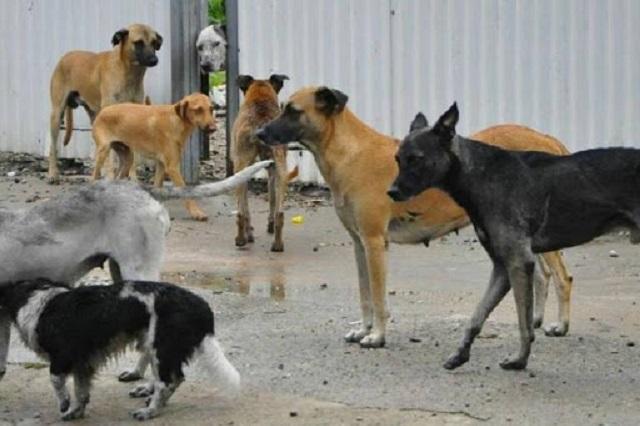 Perros se disputaban restos de recién nacido, en Amozoc
