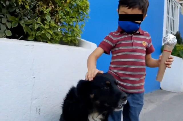 Video: Niño hace reportaje sobre los perritos callejeros y se hizo viral
