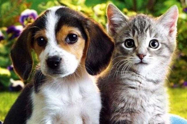 Expertos descubren que los perros son más inteligentes que los gatos