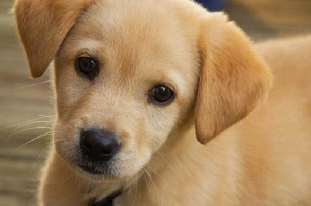 5 enfermedades que frecuentemente presentan los perros