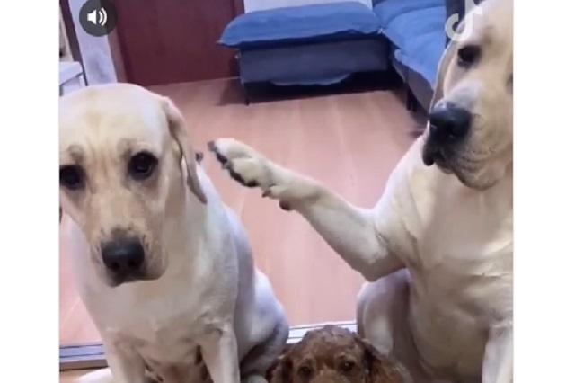 Video viral: Perro delata a su compañero y la venganza no tarda