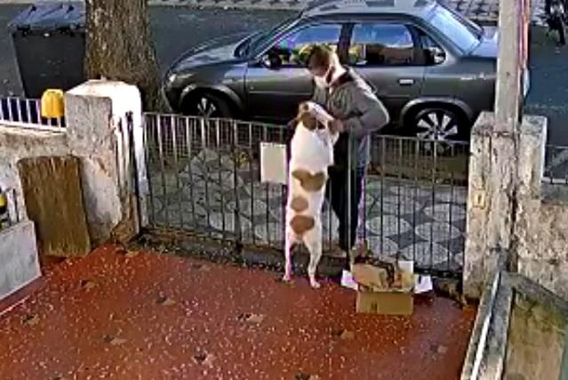 Hombre se acerca para acariciar a un perro y le roba su ropa