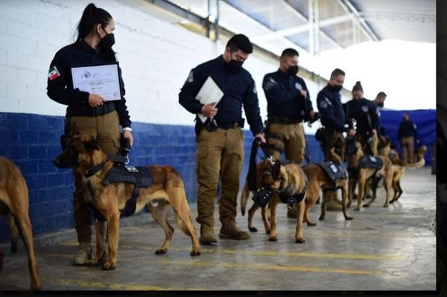 Dan certificación internacional a unidad canina del Ayuntamiento de Puebla