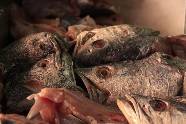 Venden pescados con ojos falsos para ocultar su mal estado