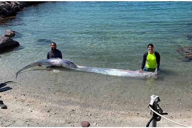 Sorprende enorme pez remo en Baja California; presagian temblor