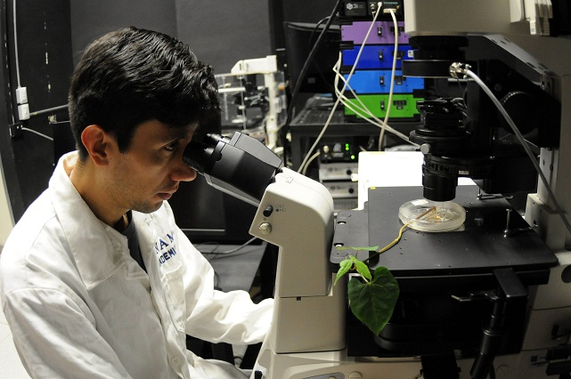 Estudian la relación entre plantas y microorganismos del suelo
