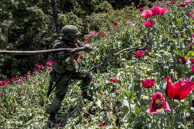 EU ofrece a México financiar la erradicación de plantíos de amapola