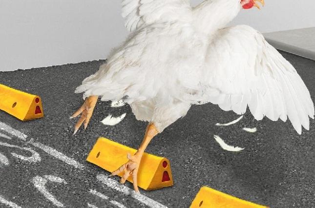 Pollo de Bachoco lo hace otra vez: revive burlas y memes por ciclovía