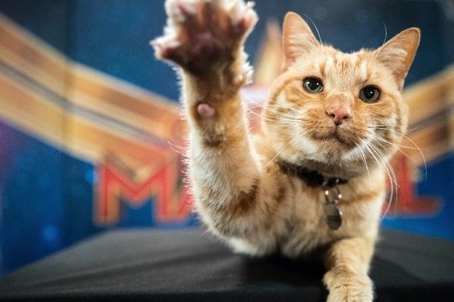 ¿Por qué se festeja del Día internacional del gato?