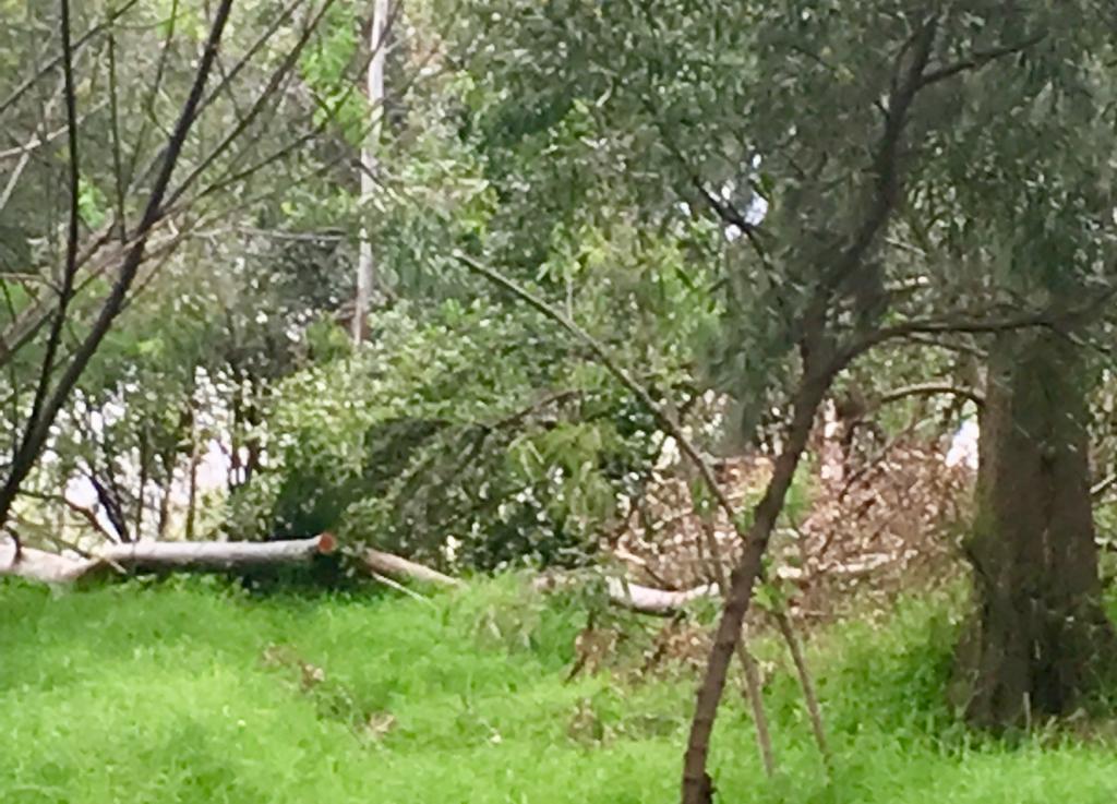 Acusan vecinos que en el vivero Santa Cruz sigue la tala