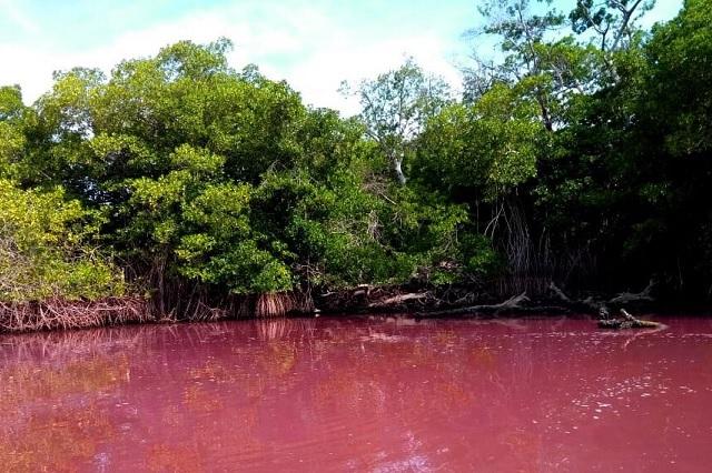 Laguna de Oaxaca se tiñe de color rosa