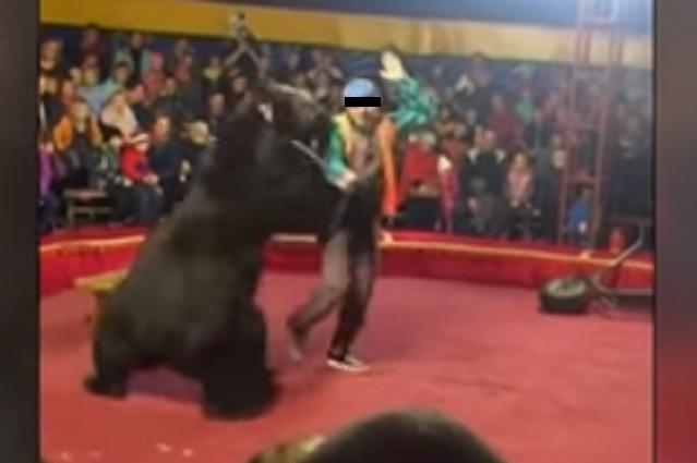 Video: Oso enfurece y ataca a su entrenador en pleno show