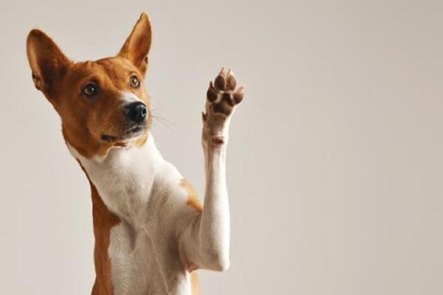 ¿Por qué las patas de los perros huelen a Cheetos?
