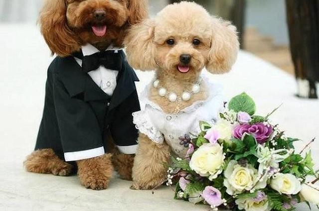 Video: boda entre dos perros se vuelve viral