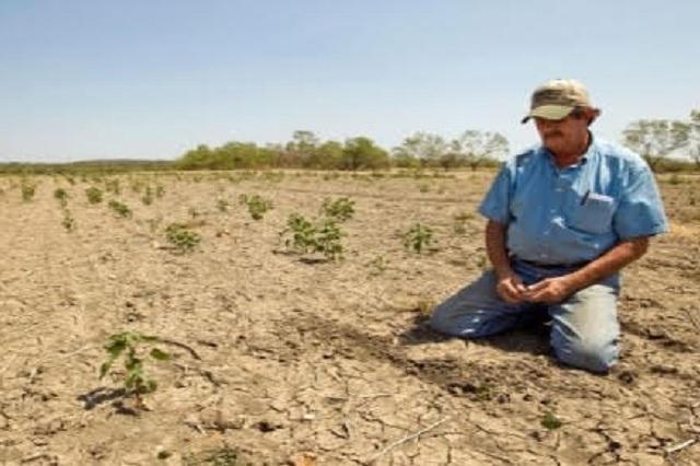 Pérdidas hasta por 80 mdp deja sequía atípica en Aquixtla
