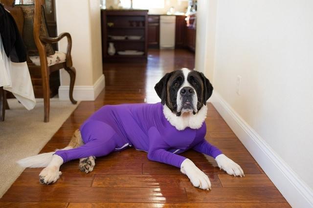 Sale a la venta traje antipelos para tu mascota