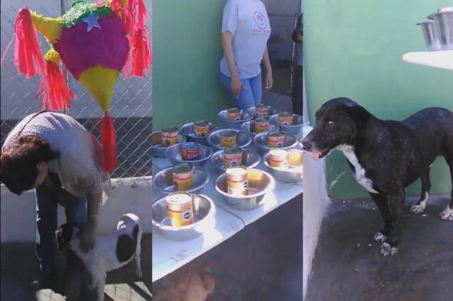 Realizan posada navideña para perros de la calle en Tamaulipas