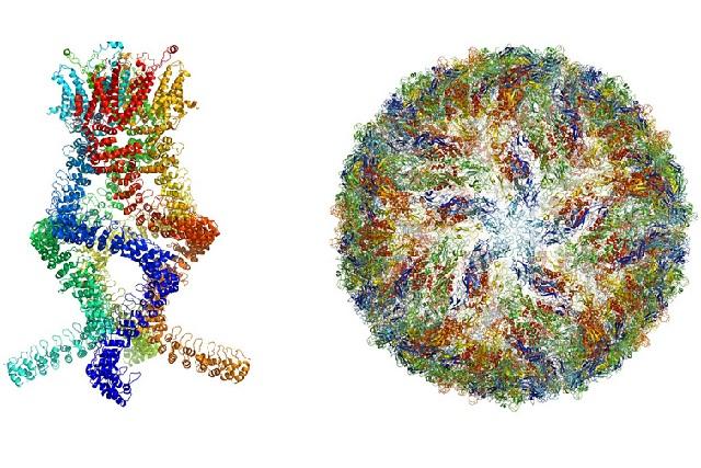 Otorgan el Premio Nobel de Química a fotógrafos moleculares