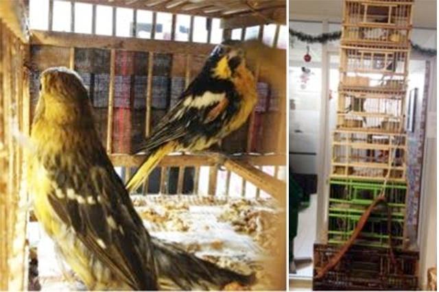 Asegura Profepa 9 aves protegidas a particular en Puebla