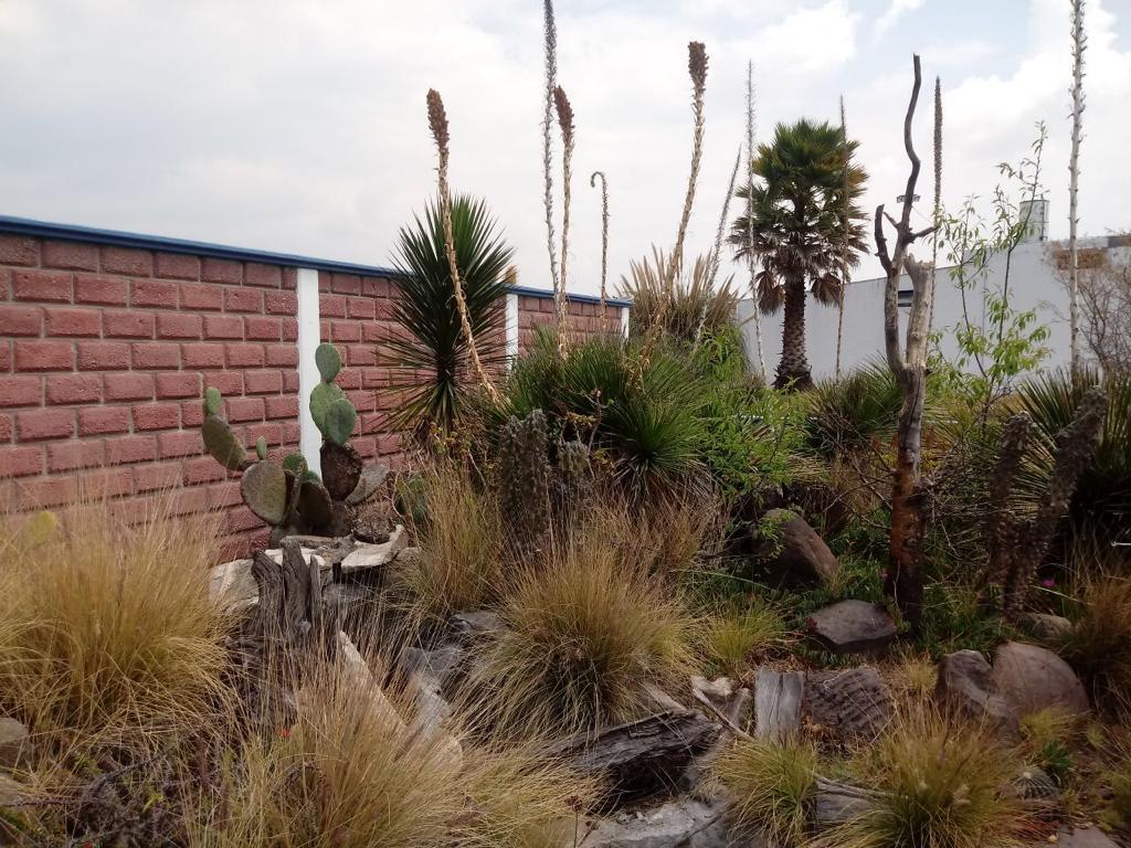 Asegura Profepa en Amozoc 61 plantas protegidas