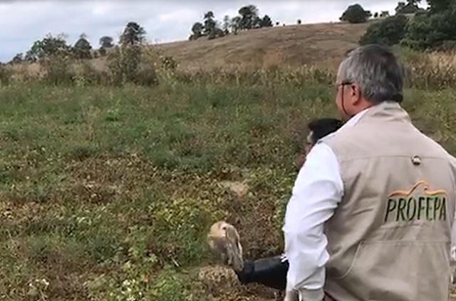 Liberan a 4 aves rescatadas en Parque Estatal Cerro Zapotecas