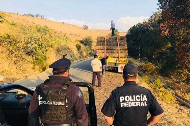 Caen dos sujetos con madera ilegal en el Pico de Orizaba