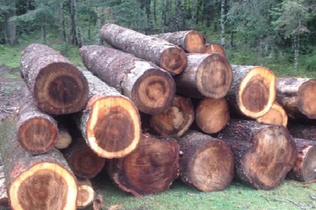 Asegura Profepa madera en rollo en Tlaxcala