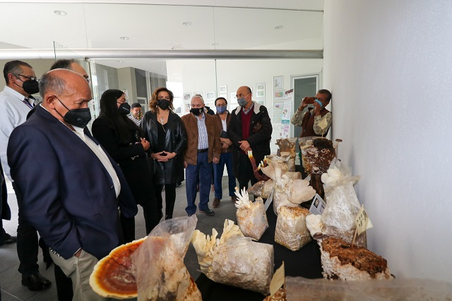 Proponen apoyar producción de huitlacoche orgánico en Puebla