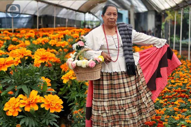 Espera Puebla 42 mdp por venta de flor de Cempasúchil