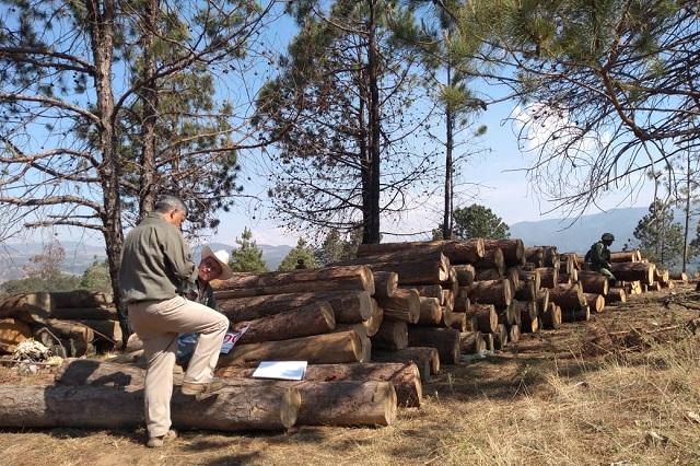 Profepa asegura madera en rollo en Zacatlán, Puebla