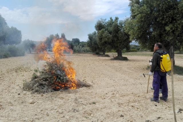 Quieren prohibir quemas agrícolas y castigarlas con cárcel en Puebla