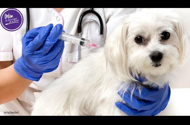 Desde 2006 no hay casos de rabia humana transmitida por perros