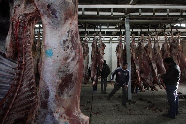 Propone diputado PVEM penalizar crueldad con animales en rastros