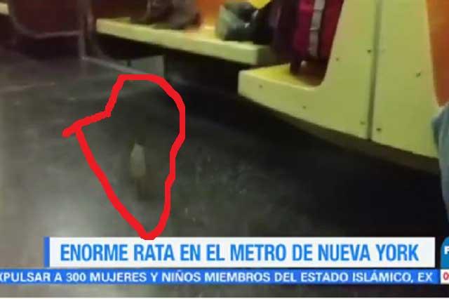 Rata sorprende y aterroriza a usuarios del metro en Nueva York
