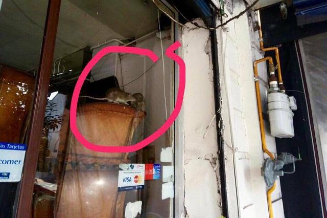 Se viralizan fotos de ratas en famosa taquería de la Ciudad de México