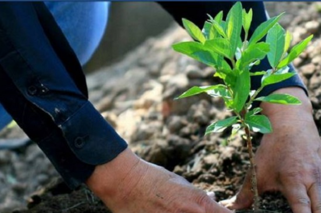 Escuelas van a reforestar Puebla para resarcir huella ecológica