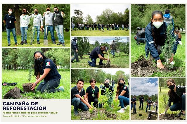 Reforesta Agua de Puebla 16 mil metros cuadrados en parques