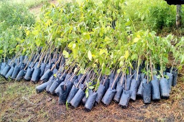 Invierte conafor 110 mdp en atenci n de incendios y for Viveros forestales conafor
