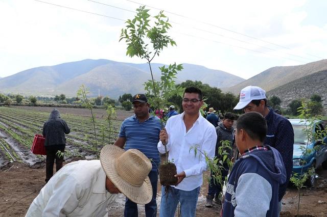 Reforestan ojo de agua en Palmarito Tochapan