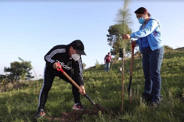 Reforesta gobierno de San Pedro Cholula el cerro Zapotecas