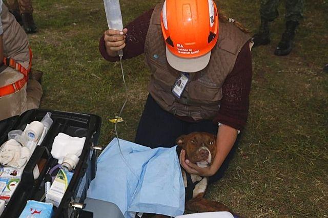 Rescatan a perritos Spike y Spay del socavón de Zacatepec