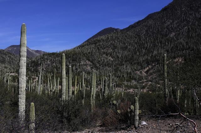 La Biósfera de Tehuacán ya es patrimonio de la humanidad